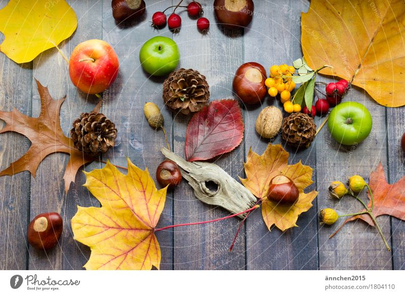autumn collection Multicoloured Autumn Seasons Yellow Orange Red Green Collection Accumulate Passion Wood Cone Rose hip Chestnut Acorn Berries Apple Search