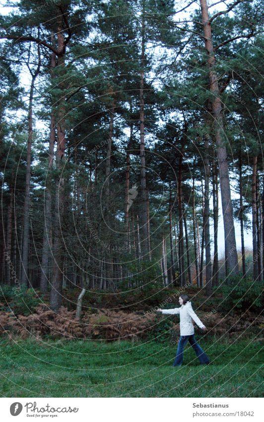 Woman Nature Tree Forest Autumn Landscape Walking Coniferous trees