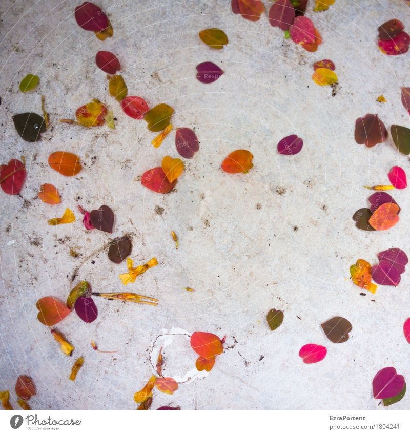Plant White Red Leaf Autumn Gray Lie Dirty Broken Tile Terrace Autumnal Autumnal colours Arranged