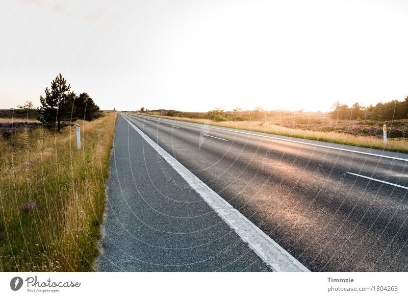 Lonely Road Sun Summer Beautiful weather Traffic infrastructure Motoring Street Joy Contentment Nature Tourism Logistics Vacation & Travel Denmark Exterior shot