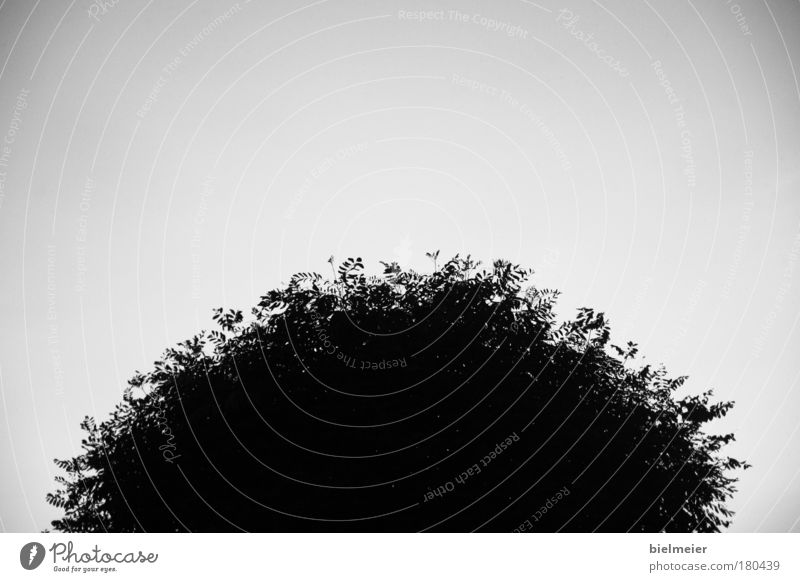 sun on earth Black & white photo Exterior shot Deserted Copy Space top Copy Space bottom Copy Space middle Neutral Background Day Contrast Silhouette