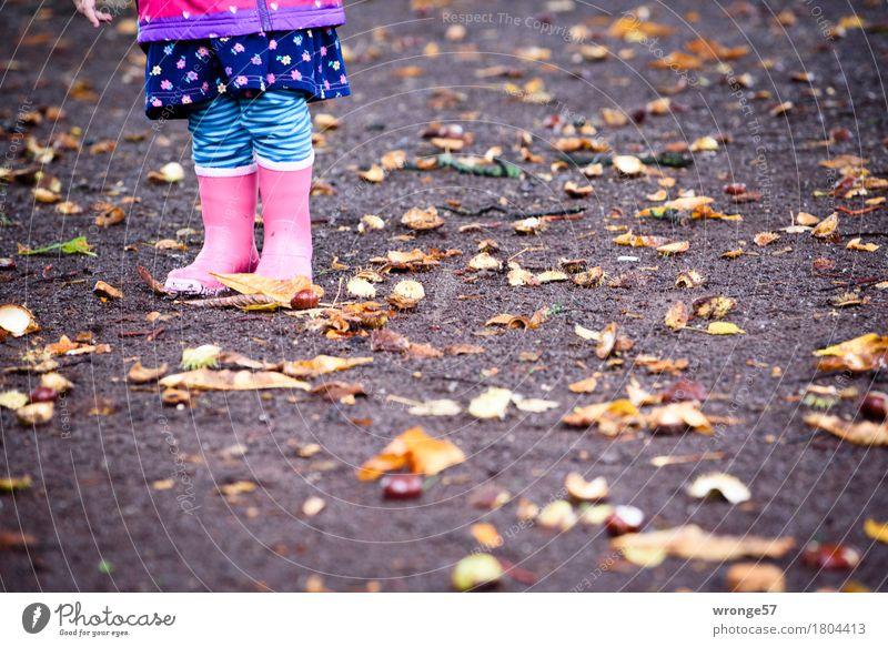 autumn Child Toddler Legs 1 Human being 1 - 3 years Autumn Chestnut Stand Thorny Under Blue Brown Multicoloured Pink Black Autumnal October Rain Autumn leaves