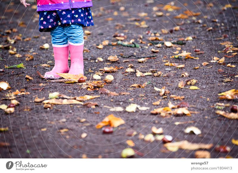 Human being Child Blue Girl Black Autumn Legs Brown Pink Rain Stand Under Toddler Autumn leaves Autumnal Thorny
