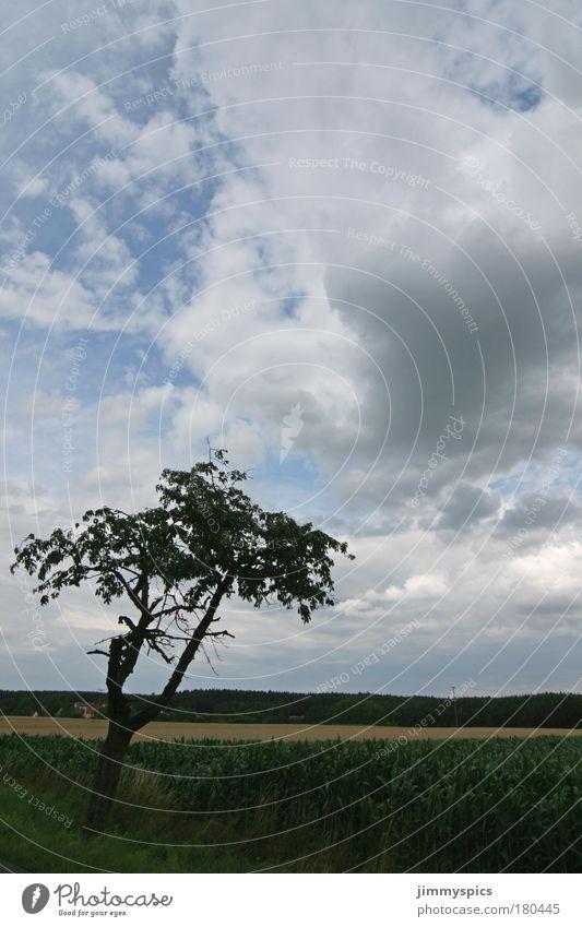 Sky Nature Tree Summer Clouds Landscape Field Tall Beautiful weather Friendliness Positive