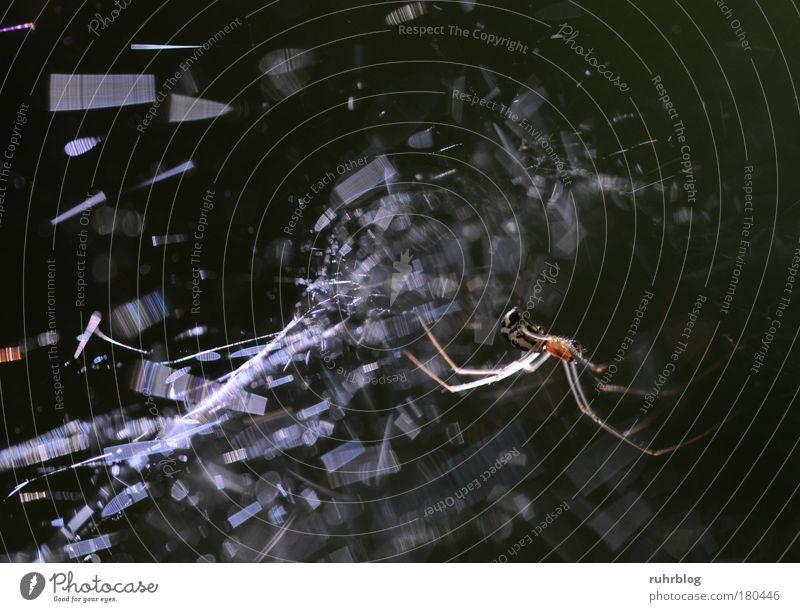 Spider's web glitters in sunlight Colour photo Exterior shot Macro (Extreme close-up) Light Light (Natural Phenomenon) Sunlight Sunbeam Back-light Nature