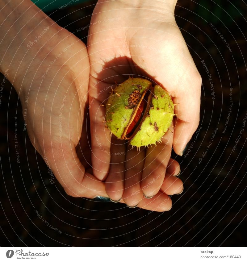 Human being Nature Hand Plant Autumn Feminine Environment Beginning Hope Protection To hold on Seed Birth Environmental protection Find Thorn