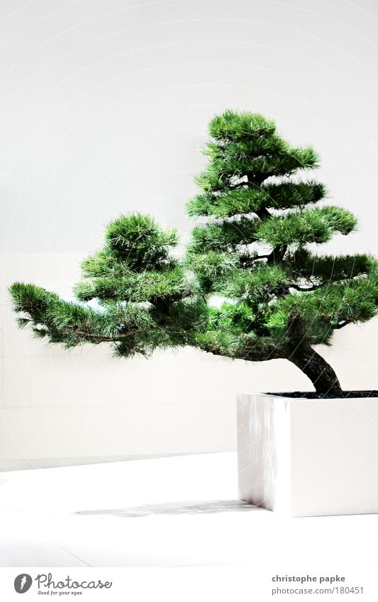 Old White Tree Plant Asia Calm Wall (building) Wall (barrier) Growth Simple Human being Japan Drought Zen Pine Foliage plant