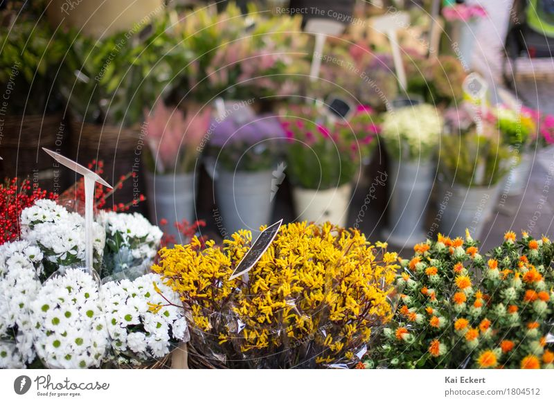 Flowers on the market Münster Bouquet Esthetic Fresh Beautiful Yellow Green Happy Contentment Spring fever Colour Serene Nature photocase Markets Autumn