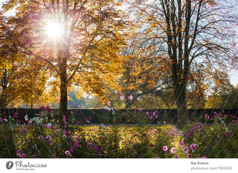 Simply autumn! Nature Landscape Plant Autumn Beautiful weather Tree Flower Blossom Park Brown Multicoloured Yellow Gold Orange Pink Happy