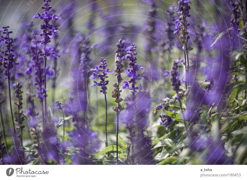 Nature Beautiful Flower Green Plant Leaf Colour Meadow Blossom Dream Park Small Esthetic Romance Violet Pure