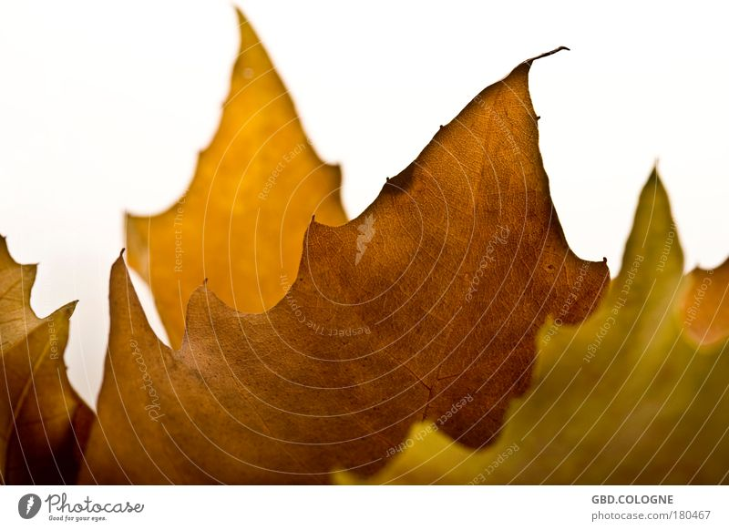 Nature White Plant Leaf Death Autumn Emotions Sadness Park Brown Moody Natural Hope Beautiful weather Transience Grief