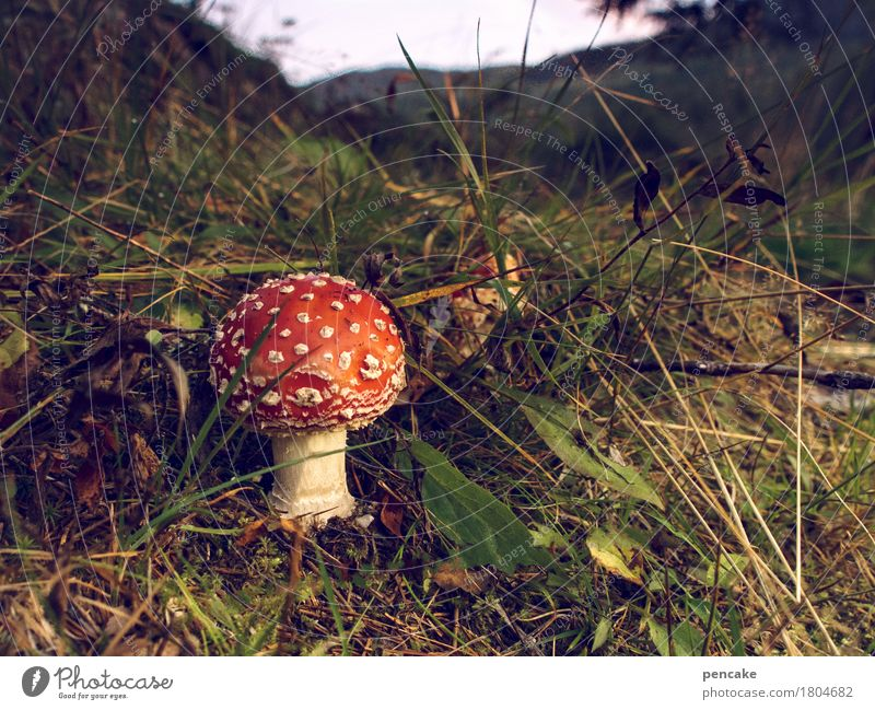 Nature Plant Landscape Red Forest Mountain Autumn Grass Esthetic River bank Mushroom Norway Amanita mushroom