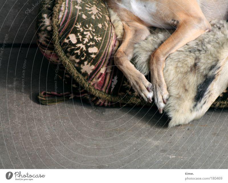 Old Relaxation Garden Dog Legs Break Lie Sofa Pelt Fatigue Terrace Paw Blanket Cushion Animal Furniture