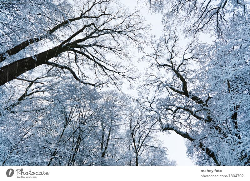 Sky Nature Beautiful White Tree Calm Winter Forest Cold Above Ice Idyll Perspective Tall Fantastic Frost