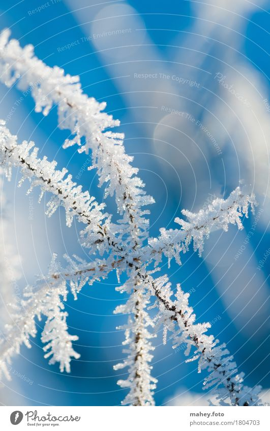 point of contact Nature Ice Frost Touch Glittering Cold Blue White Bizarre Frostwork Background picture Natural phenomenon Hoar frost structures winter cold