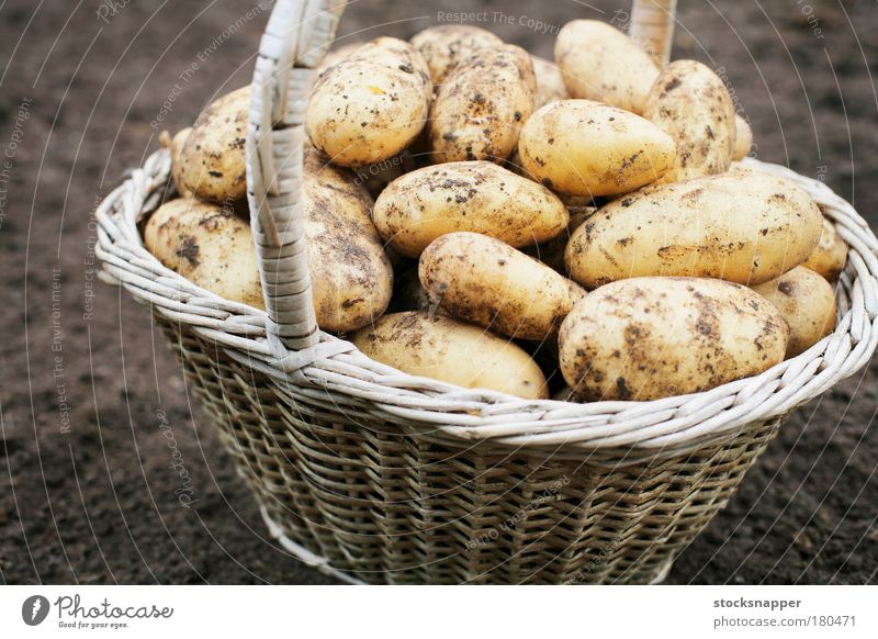 Potatoes harvest harvesting Basket Old Vegetable Staple Food Agriculture Dirty nobody