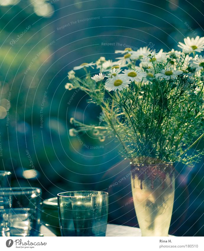 White Green Blue Joy Calm Happy Contentment Moody Glass Beverage Esthetic Joie de vivre (Vitality) To enjoy Ease Vase Chamomile