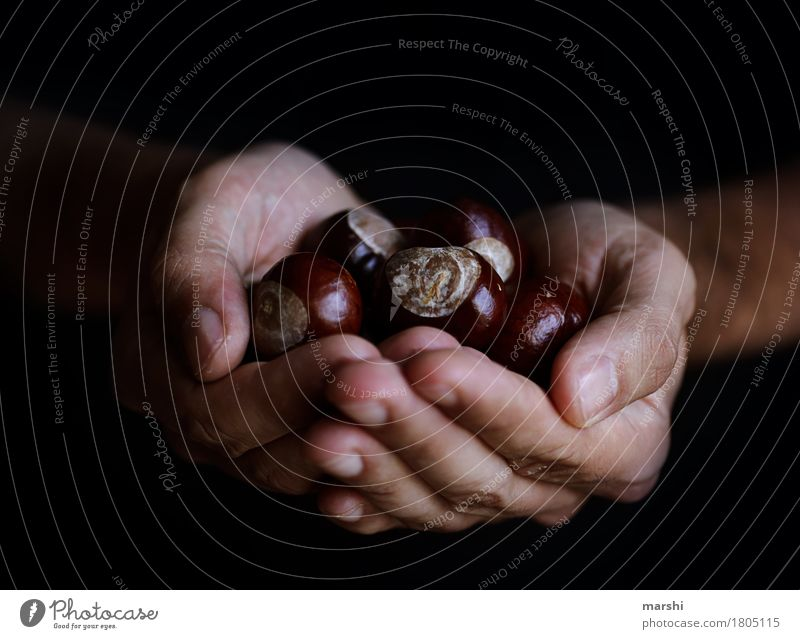 Collect chestnuts Human being Hand 1 Nature Autumn Plant Garden Emotions Moody Chestnut tree Collection Find Collector Men`s hand Autumnal Brown Colour photo