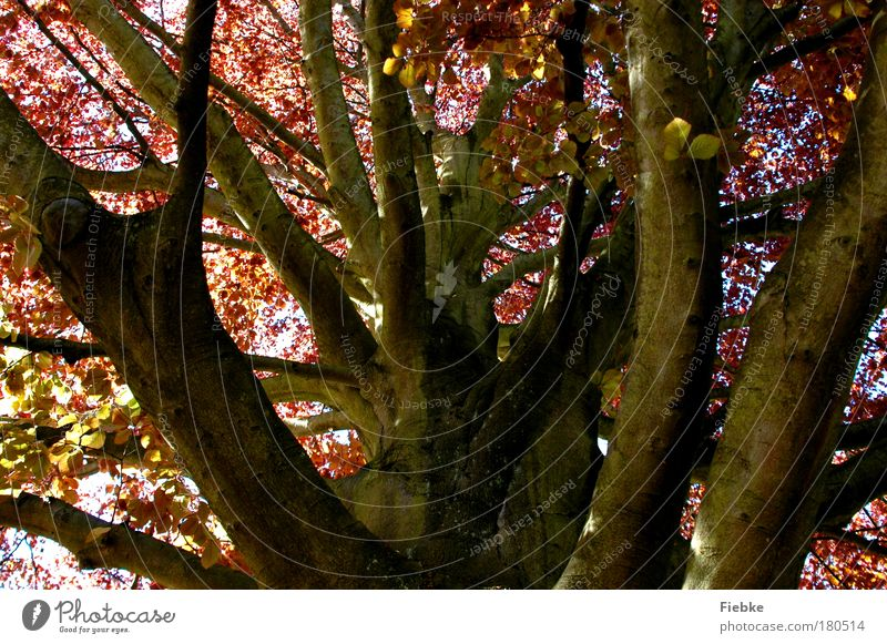Sky Nature Old Tree Leaf Calm Environment Autumn Wood Park Brown Wind Large Transience Branch Climbing