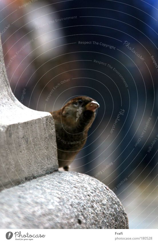Animal Bird Wild animal Cute To enjoy Breathe Sparrow