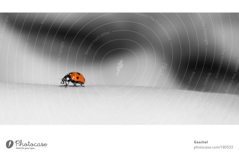 Human being Summer Red Animal Gray Infancy Skin Perspective Observe Curiosity Beetle Ladybird Accuracy