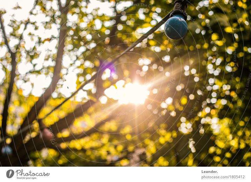The last rays of light Environment Nature Beautiful weather Yellow Gold Green Autumnal Sun Light Garden Evening Leaf Colour photo Subdued colour Multicoloured