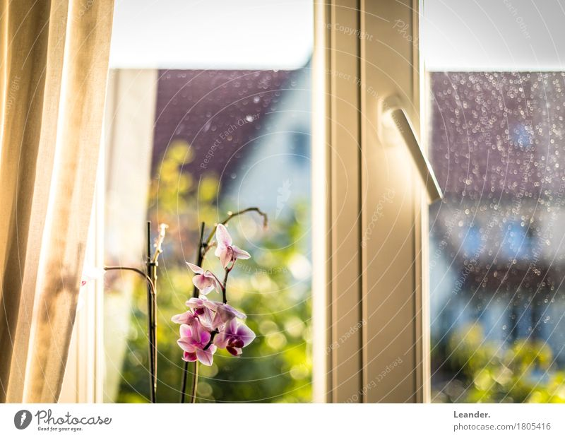 The view from the window Lifestyle Leisure and hobbies Living or residing Flat (apartment) House (Residential Structure) Interior design Decoration Furniture