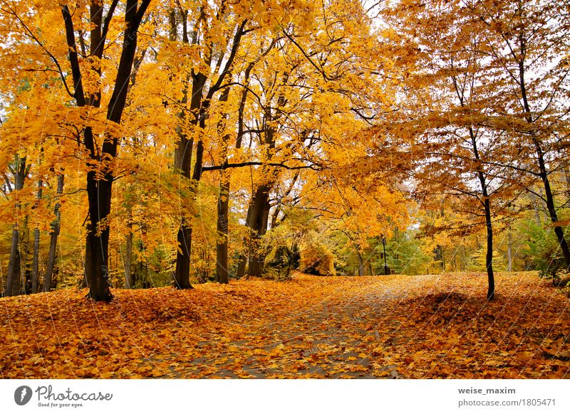 Autumn October colorful park Nature Vacation & Travel Plant Tree Landscape Red Leaf Forest Environment Street Yellow Autumn Natural Garden Brown Tourism