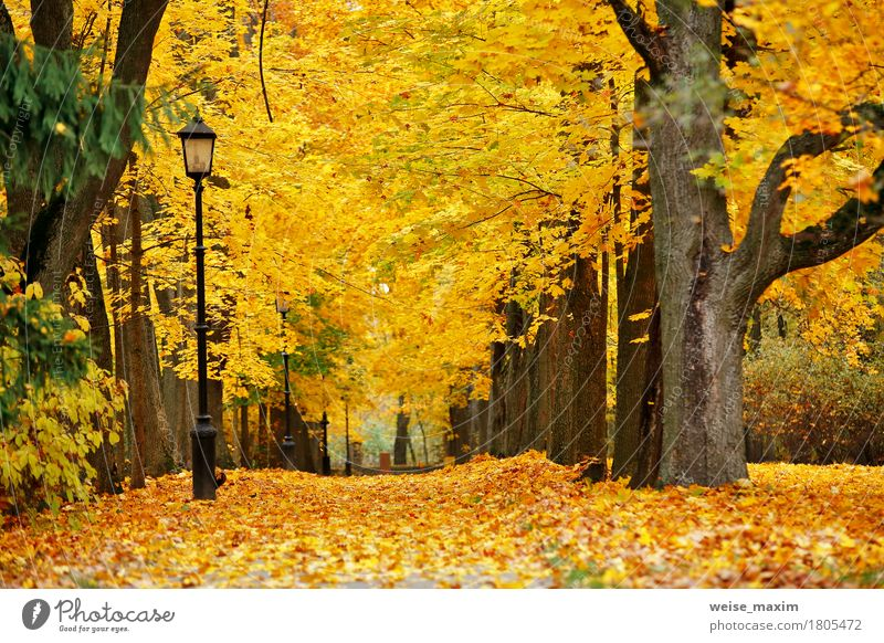 Autumn October colorful park Nature Vacation & Travel Plant Tree Landscape Red Leaf Forest Street Yellow Autumn Natural Freedom Brown Tourism Park