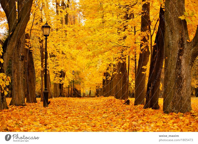 Autumn October colorful park. Foliage trees alley in park Nature Vacation & Travel Plant Tree Landscape Red Leaf Forest Street Environment Yellow Lanes & trails Autumn Natural Garden Freedom