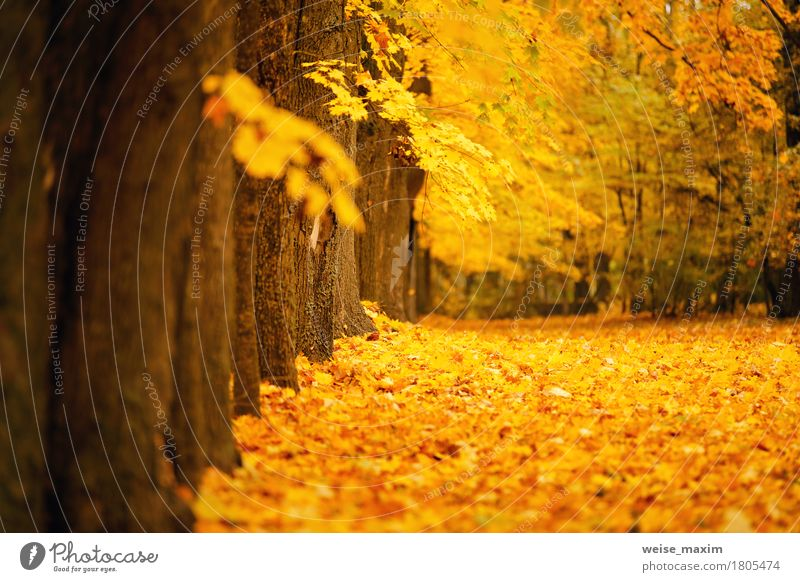 Autumn October colorful park Vacation & Travel Tourism Trip Freedom Hiking Environment Nature Landscape Plant Tree Leaf Park Forest Fresh Bright Natural Brown