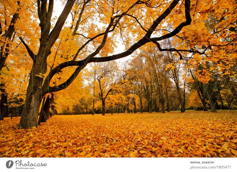 Autumn October colorful park Nature Vacation & Travel Plant Tree Landscape Red Leaf Forest Environment Yellow Autumn Natural Brown Tourism Bright Park