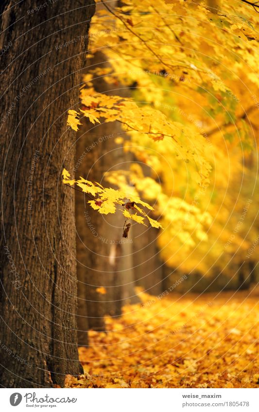 Autumn October colorful park Vacation & Travel Trip City trip Hiking Environment Nature Landscape Plant Tree Leaf Park Forest Fresh Bright Natural Brown Yellow