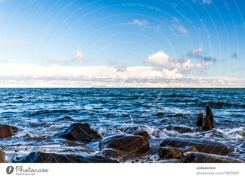 Nature Water Landscape Calm Baltic Sea Serene Watchfulness Caution Patient Attentive