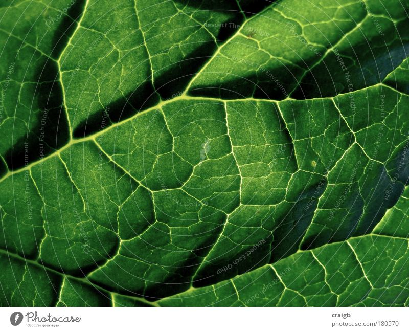 Down the back of the sofa Nature Plant Green Summer Leaf Environment Background picture Park Bushes Beautiful weather Macro (Extreme close-up) Synthesis Photosynthesis