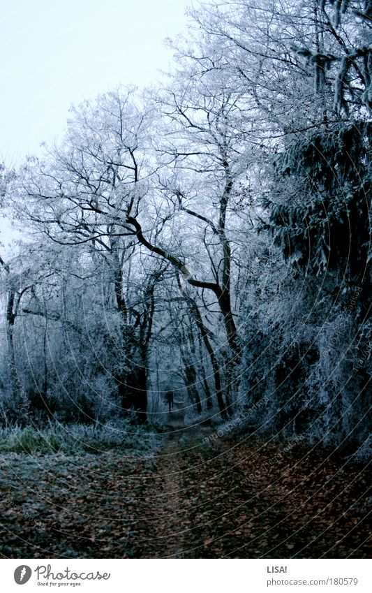 Nature Sky White Tree Green Blue Plant Winter Leaf Forest Cold Snow Meadow Grass Landscape Air