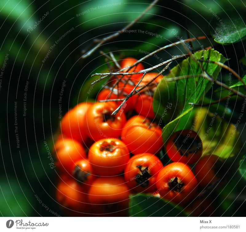 Nature Plant Summer Leaf Autumn Park Bright Orange Small Environment Fruit Bushes Branch Beautiful weather Exotic Berries