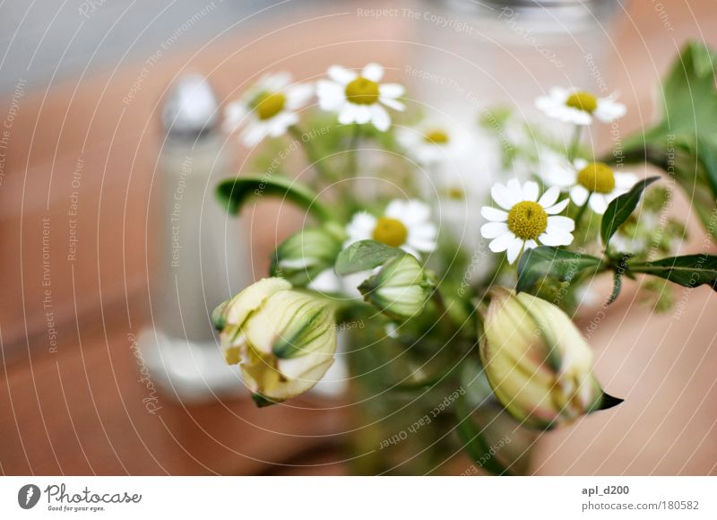 Anna flower Colour photo Subdued colour Exterior shot Close-up Morning Day Shallow depth of field Nutrition Environment Plant Spring Flower Blossom Relaxation