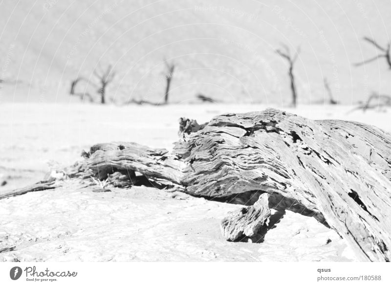 Nature Old Tree Plant Loneliness Far-off places Death Landscape Environment Wood Sand Warmth Sadness Bright Earth Climate