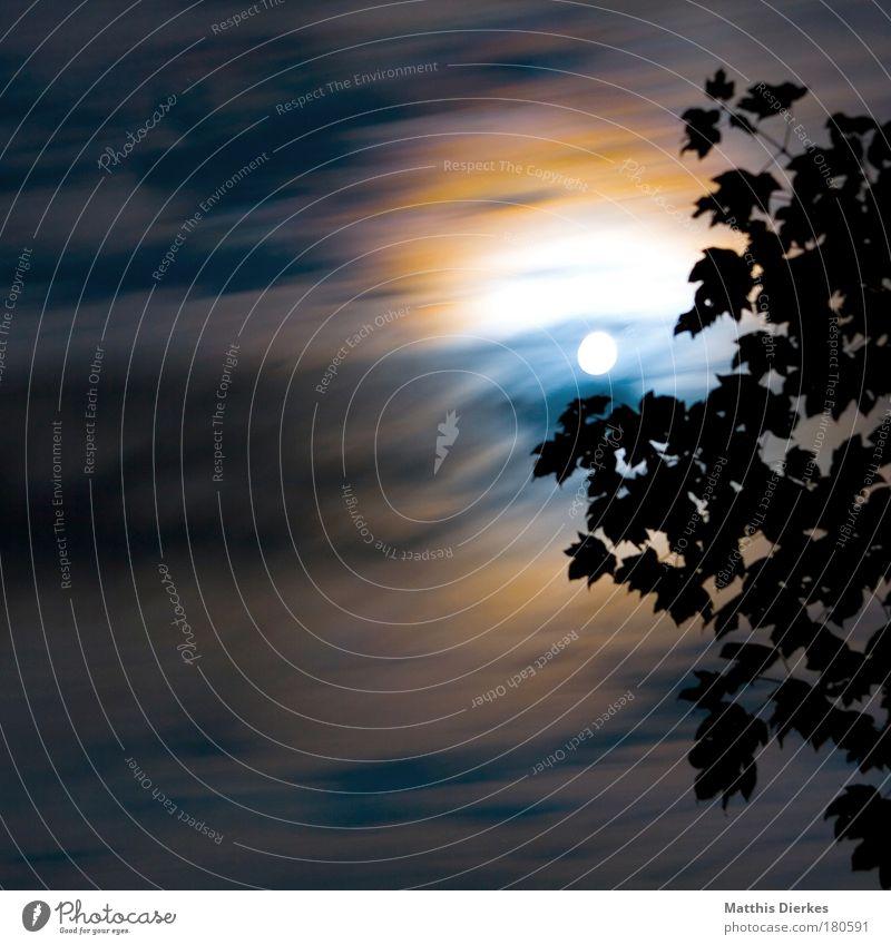 White Tree Blue Leaf Clouds Dark Sadness Emotions Orange Fear Night Fog Round Romance Threat Mysterious