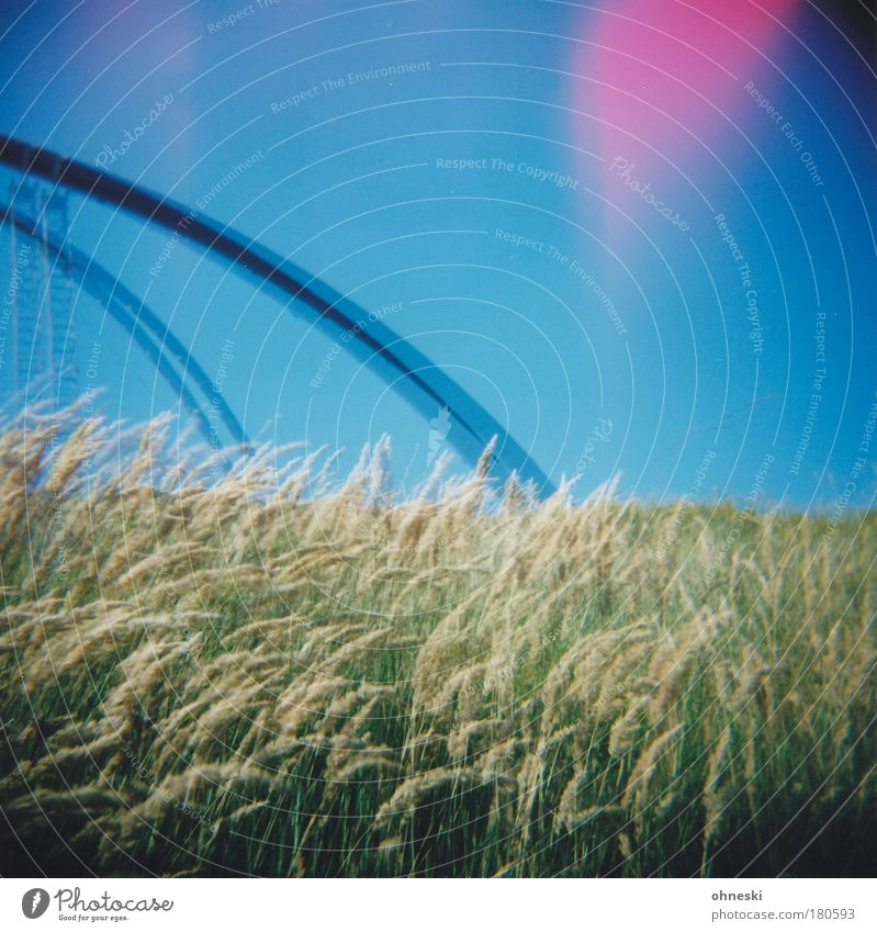 Nature Sky Blue Plant Meadow Grass Landscape Double exposure Slagheap Light leak