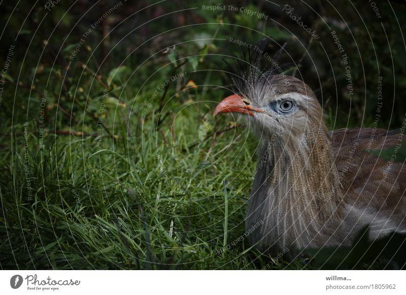 Meadow Bird Sit Exotic Animal face Beak Plumed
