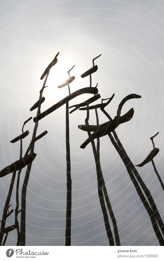 a pole signifying prayer for a good harvest (Korea) Tree Calm Animal Garden Landscape Environment Culture Sculpture Elements Beautiful weather Exotic Safety (feeling of) Determination Art Cloudless sky