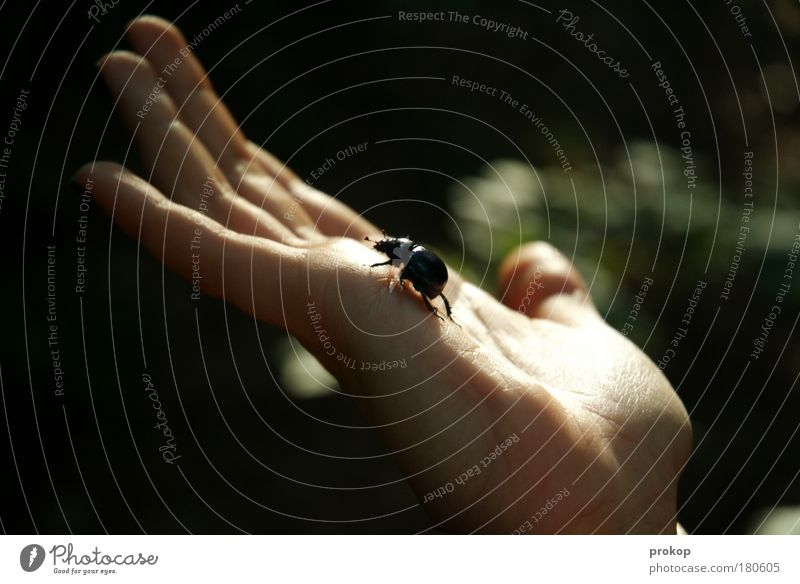Human being Nature Hand Animal Environment Small Fear Fingers Climbing Protection Living thing Brave Effort Beetle Disgust Environmental protection
