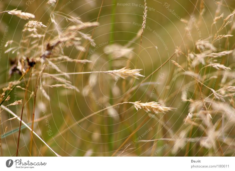 Nature Summer Warmth Meadow Grass Brown Contentment Growth Gold Wind Esthetic Simple Transience Soft Tilt Delicate