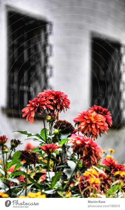 Plant Flower Red House (Residential Structure) Window Yellow Life Blossom Movement Garden Park Living or residing Growth Decoration Blossoming
