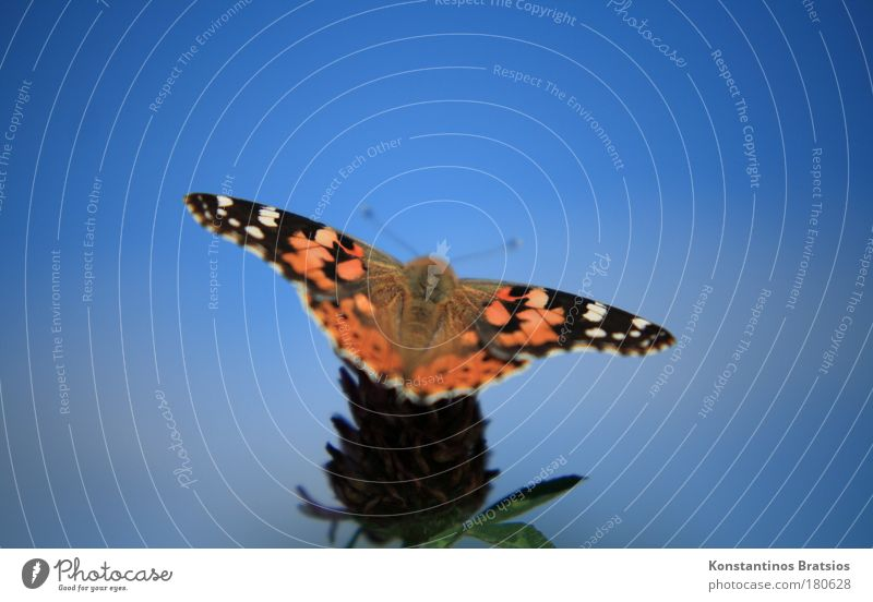 Nature Beautiful Plant Summer Animal Autumn Meadow Blossom Park Warmth Elegant Sit Wing Insect Fantastic Natural