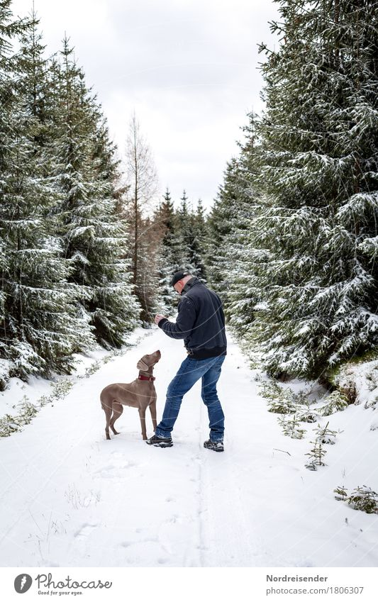 Human being Nature Dog Man Tree Relaxation Animal Joy Winter Forest Adults Lanes & trails Snow Playing Leisure and hobbies Masculine