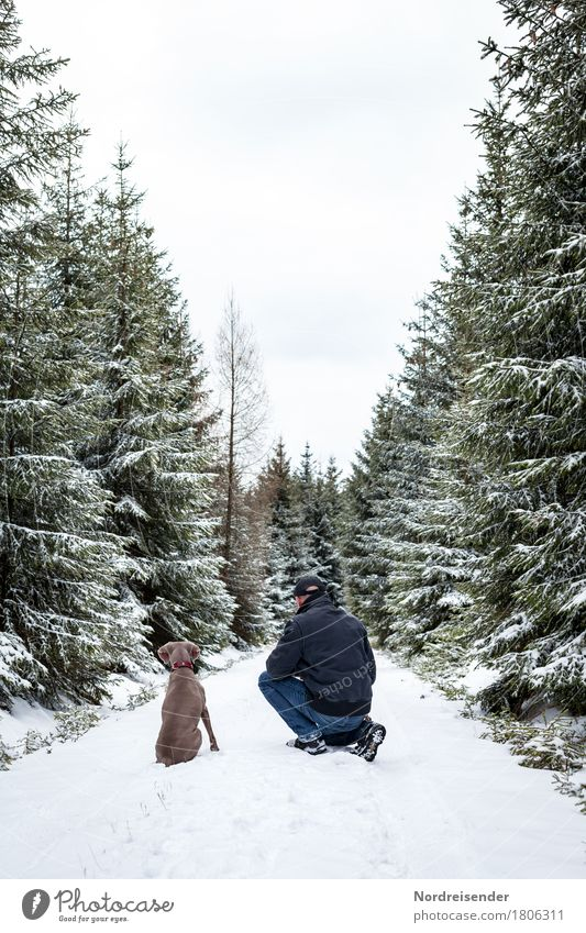 Human being Dog Nature Man White Tree Landscape Animal Joy Winter Forest Adults Lanes & trails Snow Playing Freedom