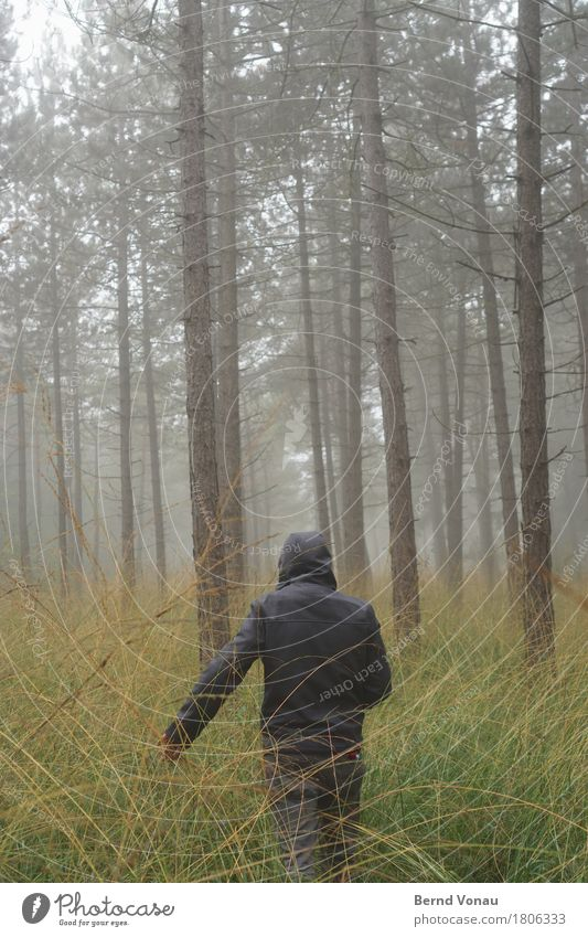 /|| 1 Human being Going Forest To go for a walk Bad weather Green Autumn Tree Pine Thin Tall Loneliness Meditative Weather protection Hooded (clothing) Grass